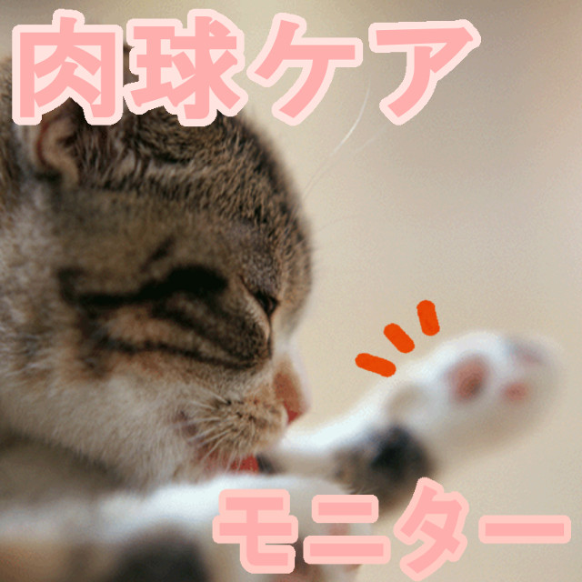 【モニター】肉球ケアクリーム【0円】