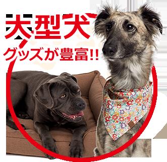 大型犬グッズが豊富!!